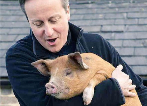 cameron and the pig